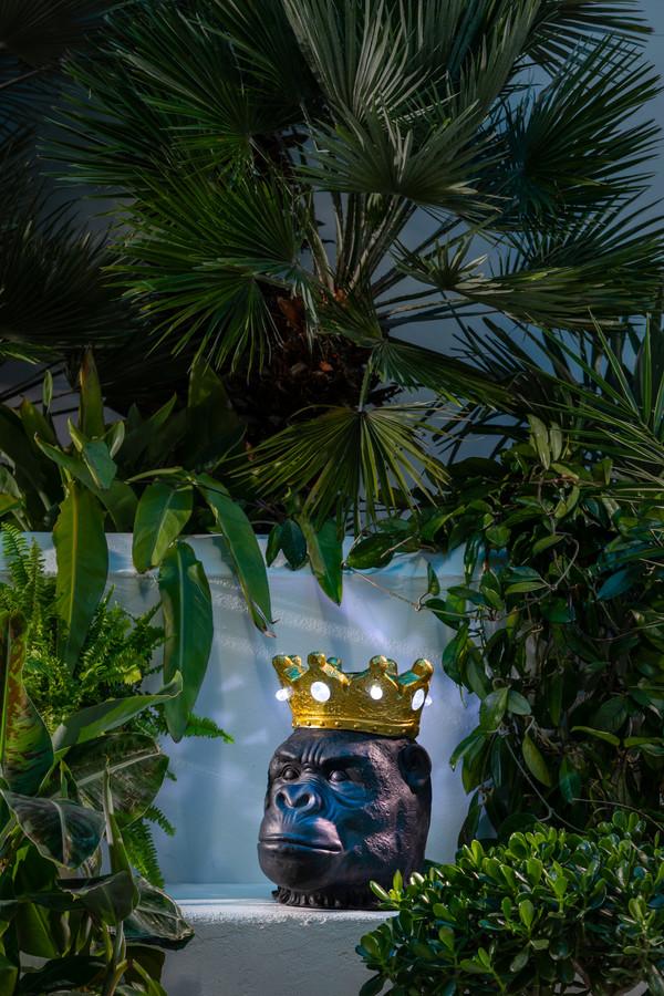 Dehner Solar-Gorilla 'Nero'