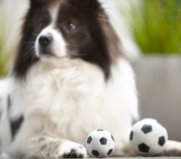"Dehner Spielball ""Sporty"", Hundespielzeug"