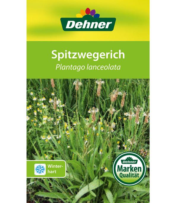 Dehner Spitzwegerich