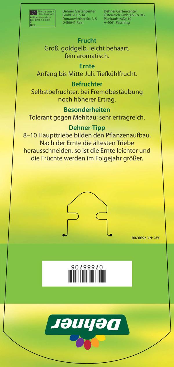 Dehner Stachelbeere 'Invicta', grün