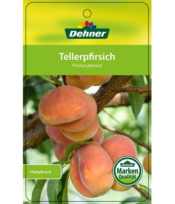 Dehner Tellerpfirsich