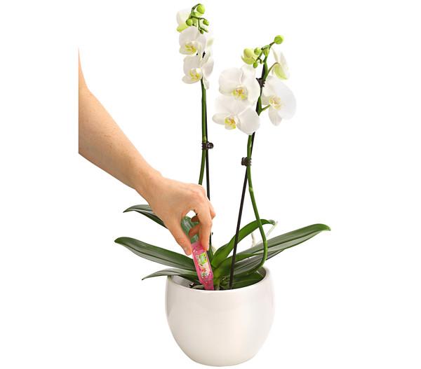 Dehner Vitalkur für Orchideen, flüssig, 30 ml