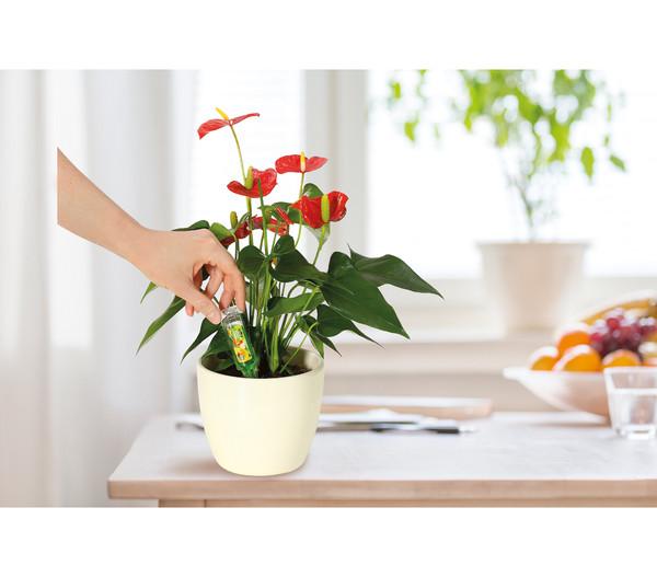 Dehner Vitalkur für Zierpflanzen, flüssig, 30 ml