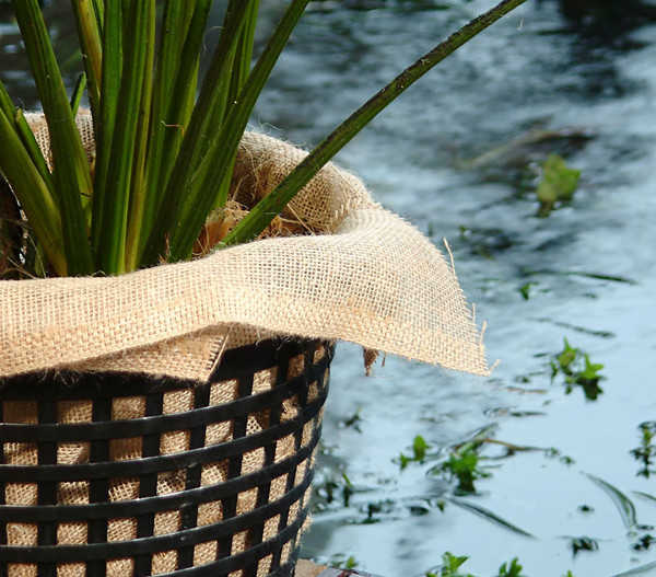 Dehner Wasserpflanzentücher, 60 x 60 cm