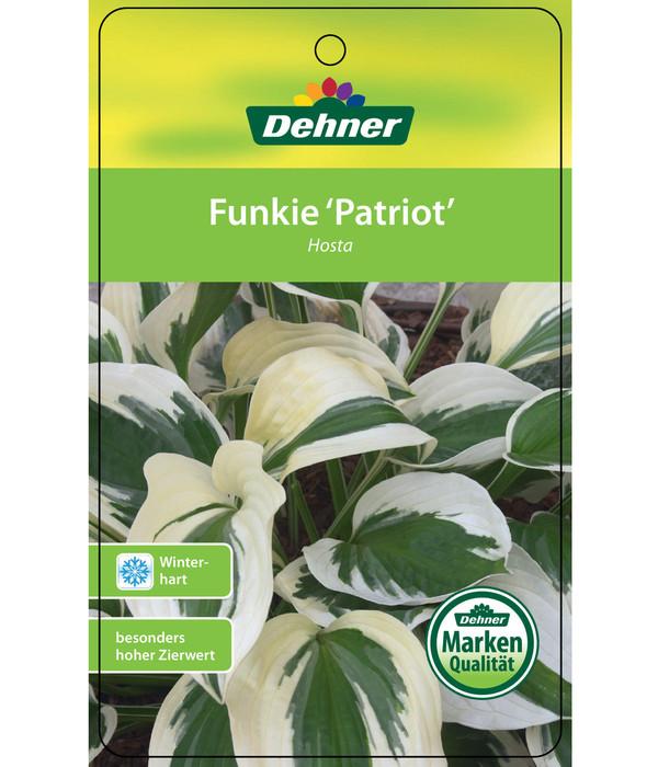 Dehner Weißrand-Funkie 'Patriot'