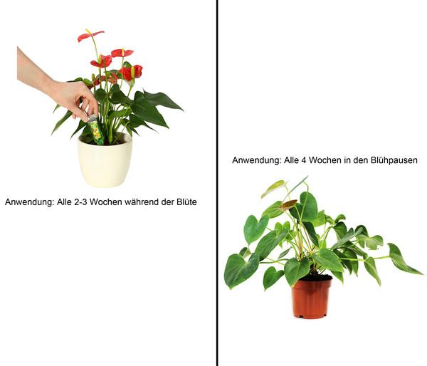 Dehner Zierpflanzen Vitalkur, flüssig