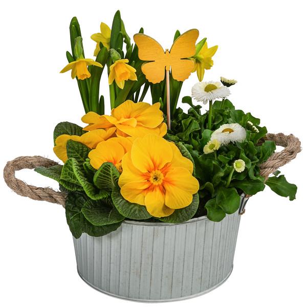 Dehner Zinkschale 'Linus', bepflanzt