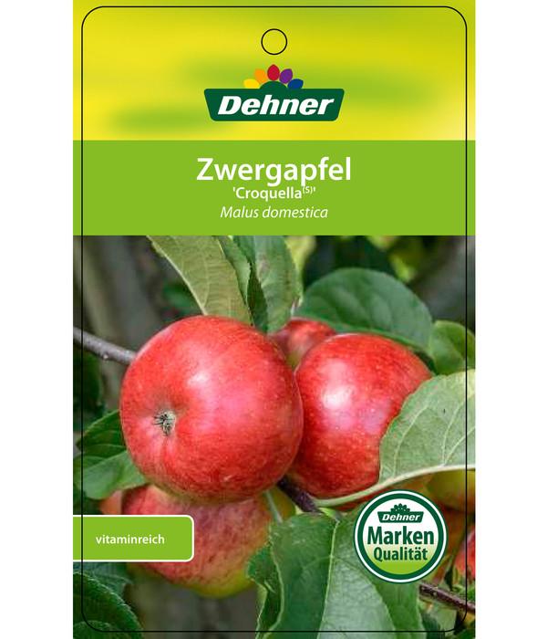 Dehner Zwergapfel 'Croquella'