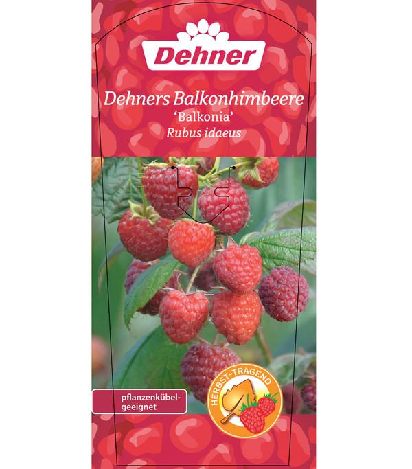 Dehner`s Balkonhimbeere 'Balkonia'