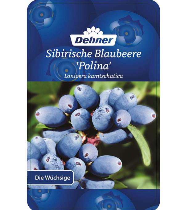 Dehner's Sibirsche Blaubeere 'Polina'