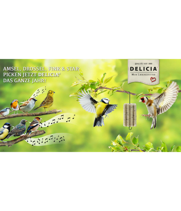 DELICIA® Wildvogelfutter Pick Me Up VitaBlocs, 6 Stück