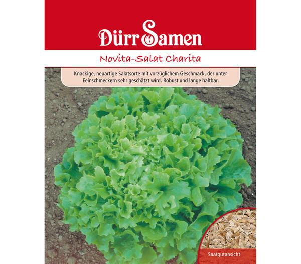 Dürr Saatgut Novita-Salat 'Charita'
