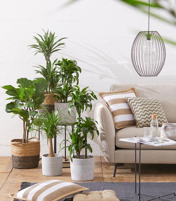 elefantenfu dehner. Black Bedroom Furniture Sets. Home Design Ideas