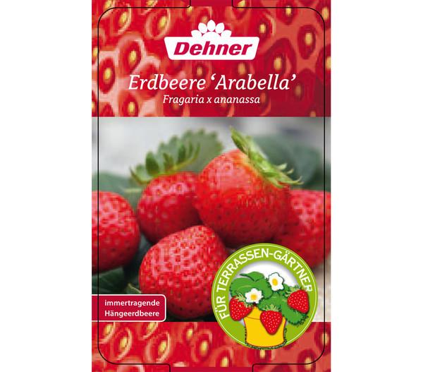 Erdbeere 'Arabella', 4er-Pack