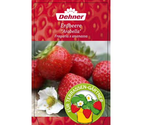 Erdbeere 'Arabella'