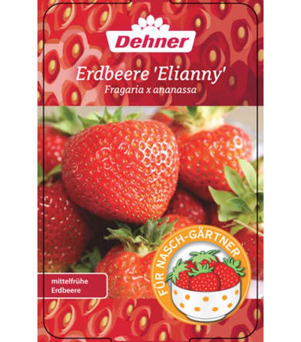 Erdbeere 'Elianny', 8er Schale