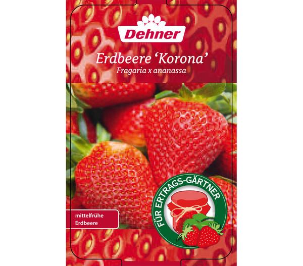 Erdbeere 'Korona'