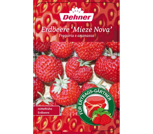 Erdbeere 'Mieze Nova', 8er Schale