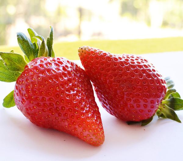 Erdbeere 'Pink Princess'