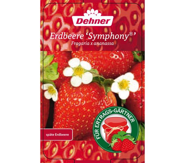 Erdbeere 'Symphony', 8er Schale