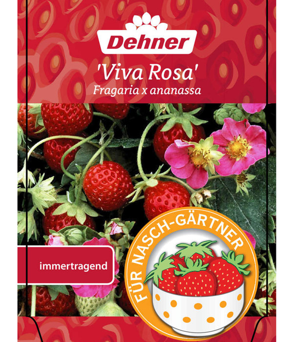Erdbeere Viva Rosa Dehner