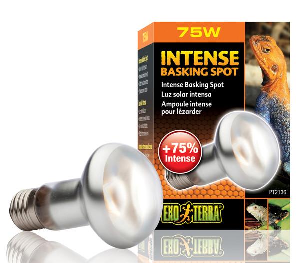 Exo Terra® Intense Basking Spot