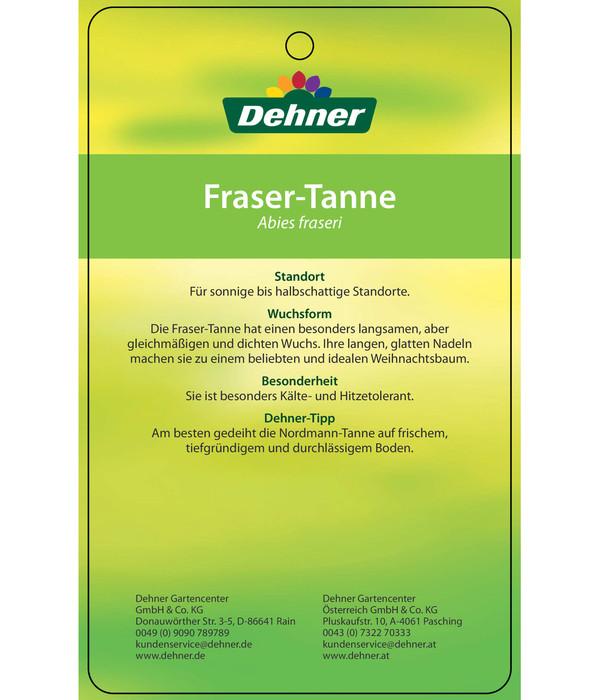 Fraser-Tanne, 110 - 130 cm, im Topf gewachsen