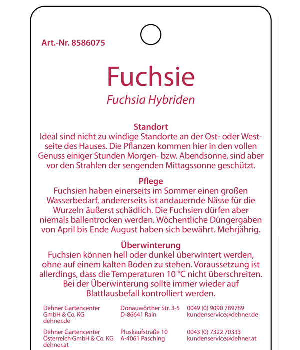 Fuchsie, Stämmchen