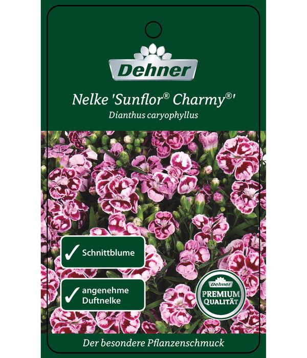 Gartennelke 'Charmy'