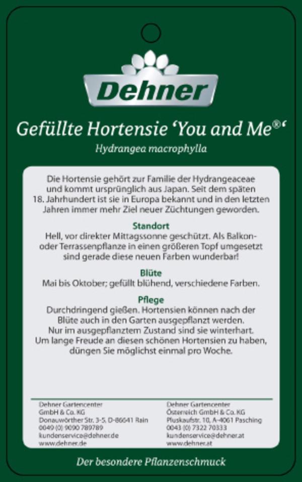 Gefüllte Hortensie 'You and Me®'