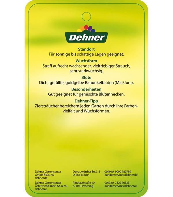 Gefüllter Ranunkelstrauch 'Pleniflora'