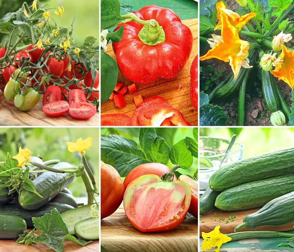 Gemüsepaket Gemüse-Mix, 6 Pflanzen