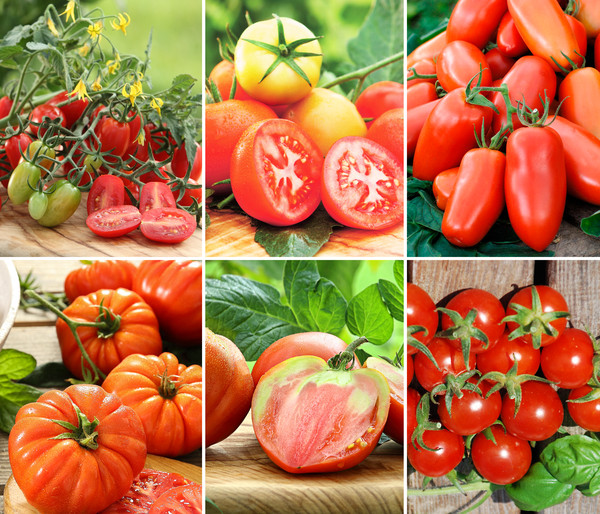 Gemüsepaket Tomaten-Mix, 6 Pflanzen