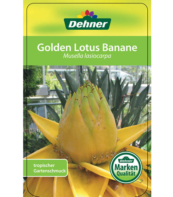 Goldene Lotusbanane