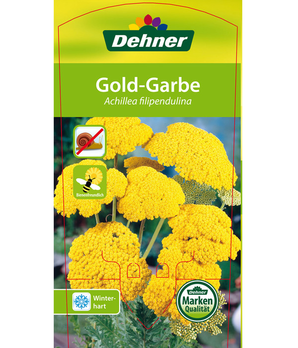 Gold-Garbe, Schafgarbe