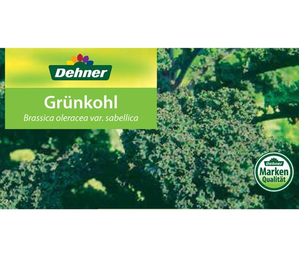 Grünkohl, 12er Schale