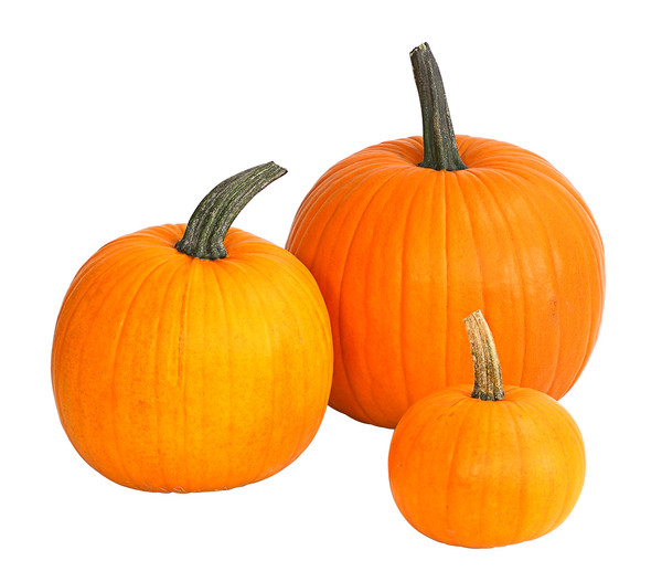 Halloween-Kürbis, klein