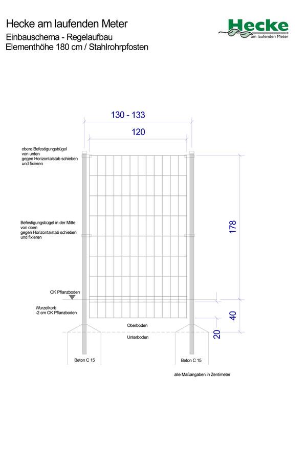 Hecke am laufenden Meter® - Kletternder Spindelstrauch 'Coloratus', 180 cm