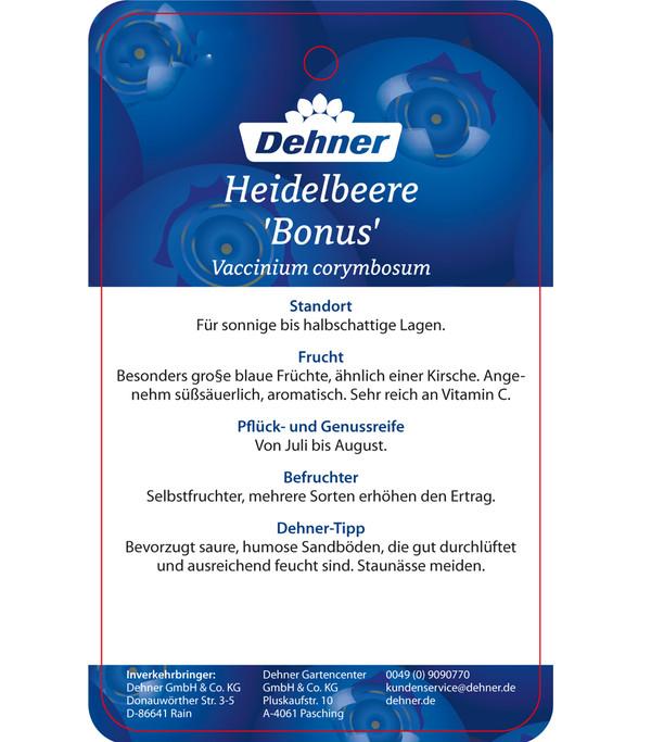 Heidelbeere 'Bonus'