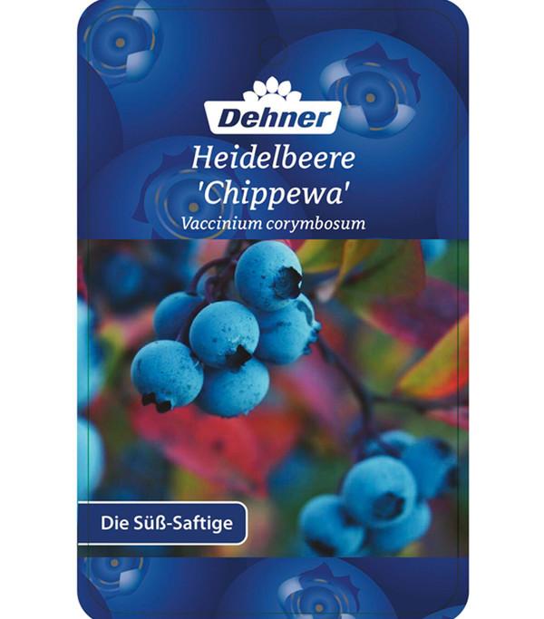 Heidelbeere 'Chippewa'