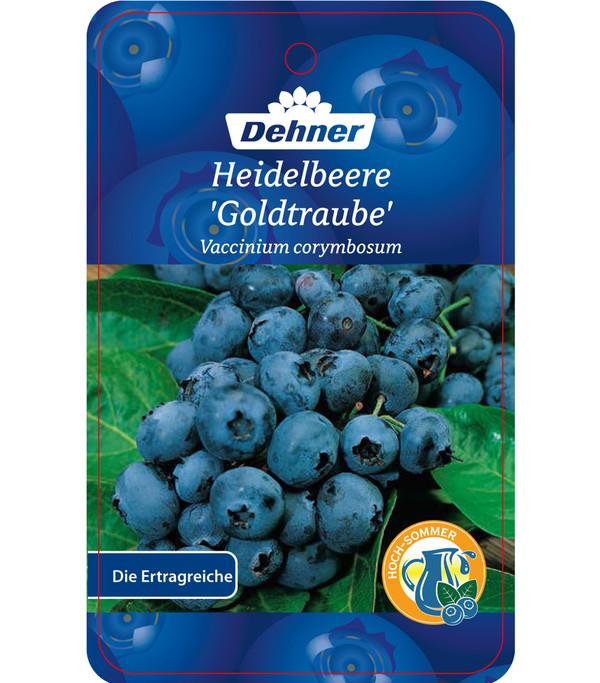 Heidelbeere 'Goldtraube'