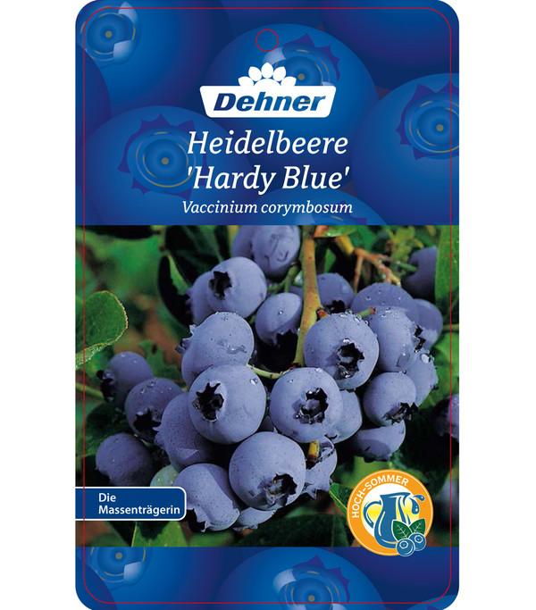 Heidelbeere 'Hardyblue'