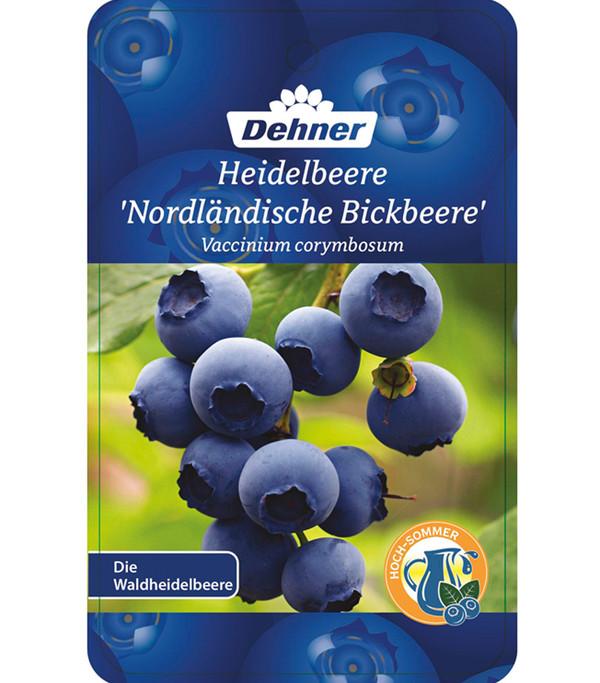 Heidelbeere 'Nordländische Bickbeere'