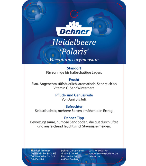 Heidelbeere 'Polaris'