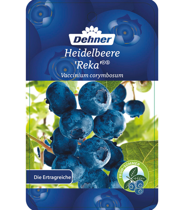 Heidelbeere 'Reka'®