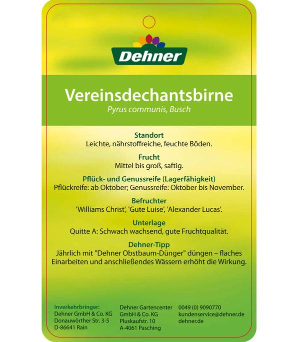 Herbstbirne 'Vereinsdechant'