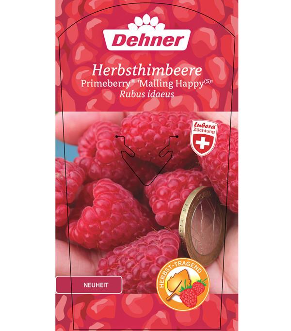 Herbsthimbeere Primeberry® 'Malling Happy®'