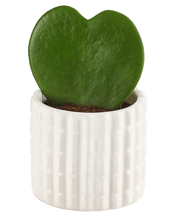 Herzpflanze, in Keramik