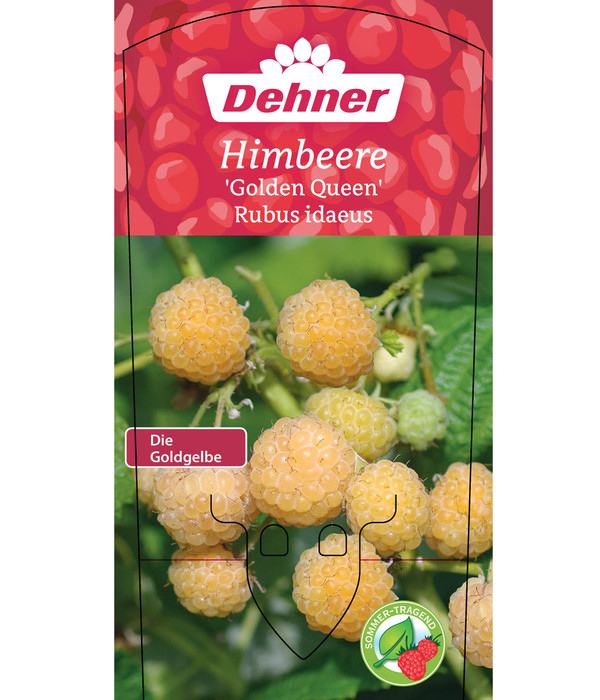 Himbeere 'Golden Queen'