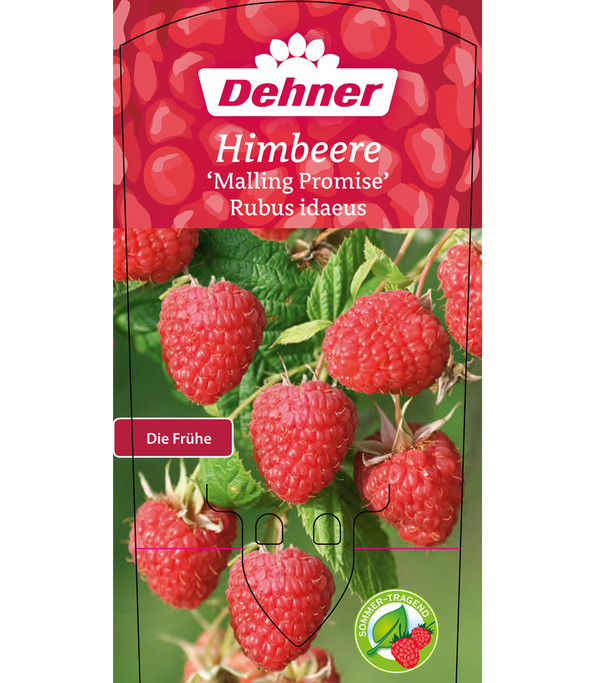 Himbeere 'Malling Promise'